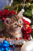 Fluffy kitten — Stockfoto