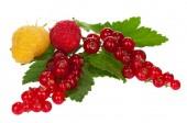 Shiny berries — Stock Photo