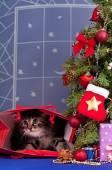 Fluffy kitten — Стоковое фото