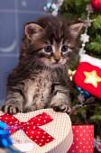 Fluffy kitten — Stock Photo