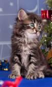 可爱的小猫 — 图库照片