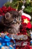 かわいい子猫 — ストック写真