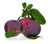 Red plums — Stock Photo