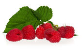 Ripe raspberries — Stock Photo