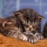 Newborn kittens — Stock Photo #63203211