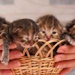 Newborn kittens — Stock Photo #64498219