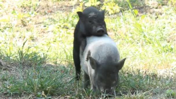 Great shape videos de sexo de humanos com animais