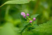 Close-up of purple flower — Stock Photo