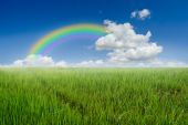 Rijst veld regenboog en blauwe hemel. — Stockfoto