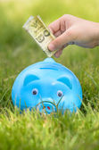Blue piggy bank sitting on grass with hand putting Thai money. — Stock Photo