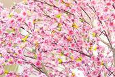 Fake Sakura spring blossoms with shallow depth of field  — Stock Photo