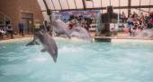 Dolphins: Mom and 2 sons in a jump in the Rostov dolphinarium   — Stock Photo