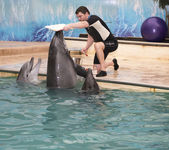 Dolphin -Mom makes an imprint of the lips in the picture — Stock Photo