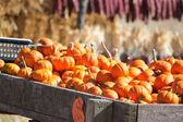 Pumpkin table — Stock Photo