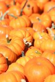 Mini pumpkins — Stock Photo
