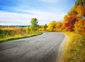 Camino rural en bosque otoñal — Foto de Stock