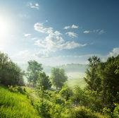 Dimmig morgon i en grön skog — Stockfoto
