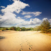 Footprints in the hot sand in the desert — Stock Photo