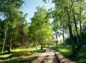 Country road in the forest under the green trees — Stock Photo