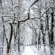 Road in the winter forest — Stock Photo #64332819