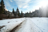 Carriageway road in the winter forest — Stock Photo