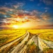 Two divergent sandy road in a field — Stock Photo #70457913