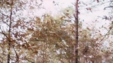 Bird falling from tree — Stock Video