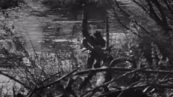 Hunter running through forest — Vídeo de stock