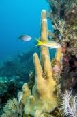Sualtı mercan — Stok fotoğraf
