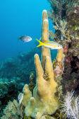 Underwater coral reef — Stock Photo