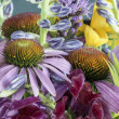 Echinacea purpurea — Stock Photo #60993327