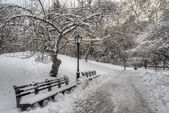 Central park, em nova york — Fotografia Stock