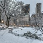 Central Park, New York City — Stock Photo #65777161