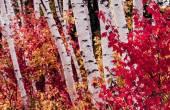 White Mountains, New Hampshire — Stock Photo