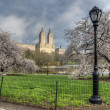 Spring Central Park, New York City — Stock Photo #72129147