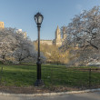 Central Park, New York City — Stock Photo #72129235
