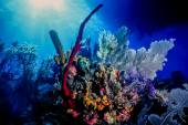 Underwater coral reef — Stock Photo