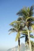 Rio de Janeiro Palm Trees Two Brothers Mountain Brazil — Stock Photo