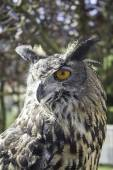 Owl falconry — Stock Photo
