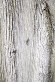 Tree deteriorated wood — Stock Photo