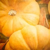 Pumpkins with a Textured Effect — Stock Photo