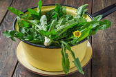 Washed dandelion leaves for a salad — Stock Photo
