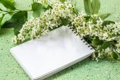 Branch blossoming bird cherry and notebook — Stock Photo