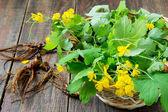 Harvesting for celandine herbal — Stock Photo