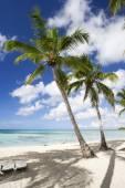 Palm trees on tropical beach — Stock Photo