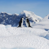 Penguins on glaciers and icebergs in Antarctica — Fotografia Stock