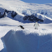 Penguins on glaciers and icebergs in Antarctica — Stock Photo
