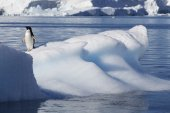 Penguin on glaciers and icebergs in Antarctica — Fotografia Stock