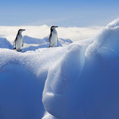 Nature and landscapes of Greenland with penguins — Stock Photo