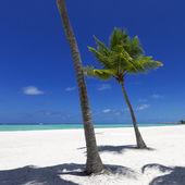 Spiaggia isola tropicale — Foto Stock